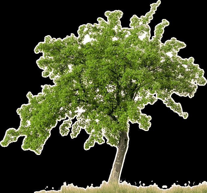 trees-plan-png-12